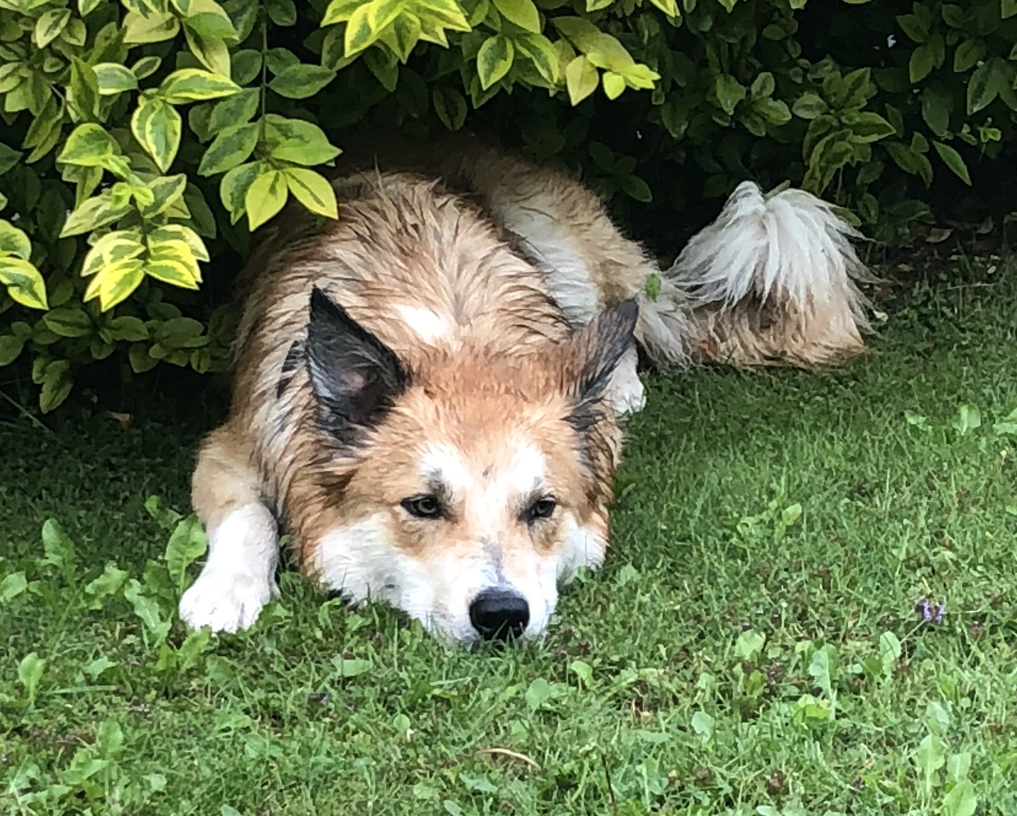 Loving home needed for Border Collie cross in the care of RSPCA Worcester & Mid-Worcestershire Branch