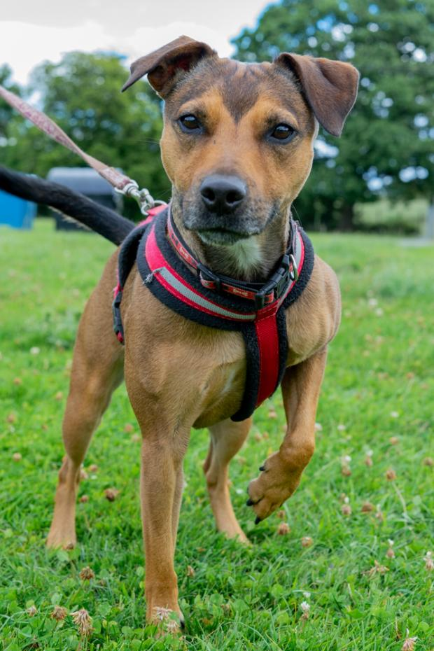 Worcester News: Could you open your heart and home to Pepper? (Photo: Worcestershire Animal Rescue Shelter)