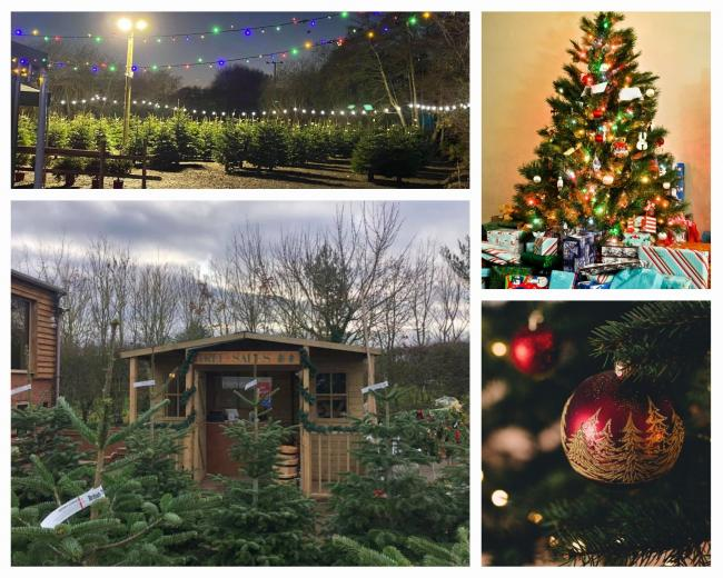 This is where to buy a real Christmas tree near Worcester (Facebook)
