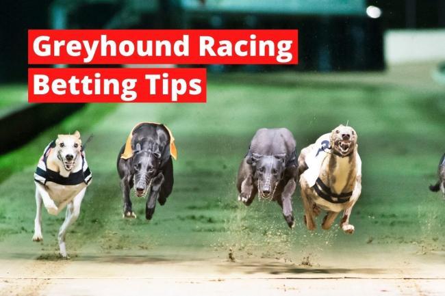 greyhound betting racing post