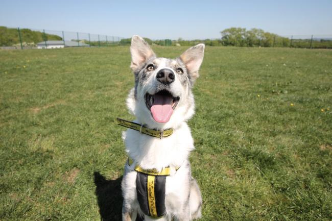SEARCHING: Blaze has spent more than 500 days at Dogs Trust Evesham