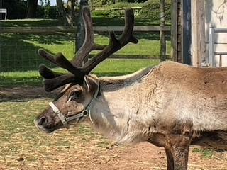 Worcester News: Smart Trees' reindeer are always popular