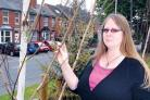 Sue Webster pictured with one of the trees on Hylton Road. She says many of the young trees are now completely 'devoid of life'. 32064001