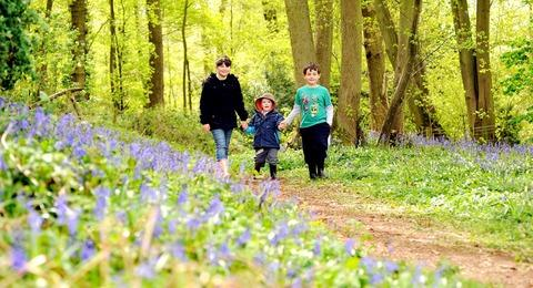 Worcester News: FAMILY FUN: Jasmine Dredge, aged nine, Dafydd Rees, three, and Alex Dredge, seven, enjoy a walk in a wood filled with bluebells.