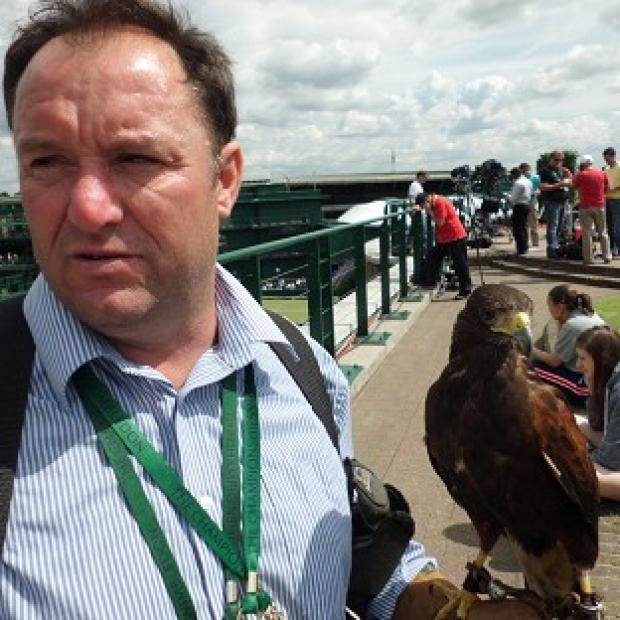Rufus the Harris hawk, who keeps pigeons at bay during Wimbledon fortnight, has been stolen