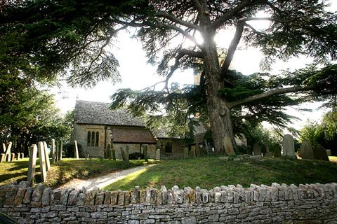 WHO WANTS TO LIVE FOREVER? The doomed cedar tree in Little Comberton's churchyard.