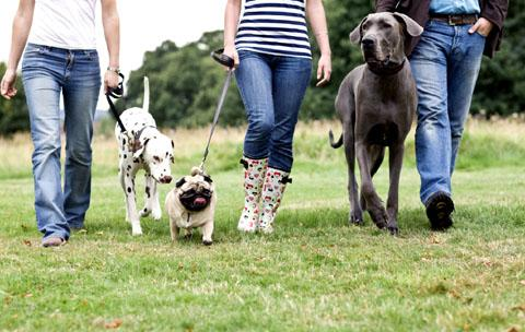 TRICKY UNDERFOOT: Dog-walkers who fail to clean up after their pets could be handed a £75 on-the-spot fine.