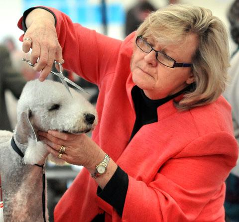 IT'S A SNIP: An owner does some finishing touches at the annual dog show at the Three Counties Showground. Pictures by John Anyon. 0113215309
