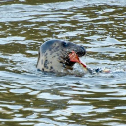 Petition launched to save Keith the seal from 'drastic action'