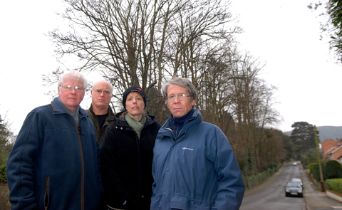 80FT TREES: Concerned residents of Somers Road, from left, are John Dixon, brother and sister Simon and Sarah Oddy and Neil Mackenzie. Picture by Nick Toogood. 0913255002.