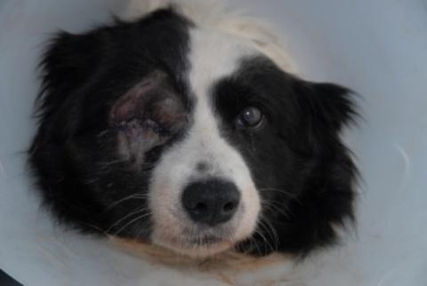 Collie Kiri who was attacked during the burglary