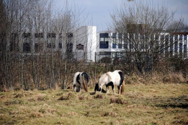 Fly grazing: an ongoing concern in Warndon