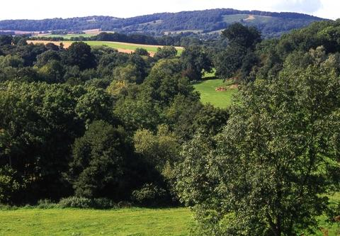 NATURE'S BOUNTY: A walk through the Suckley Hills and the valley of Leigh Brook covers two nature reserves.