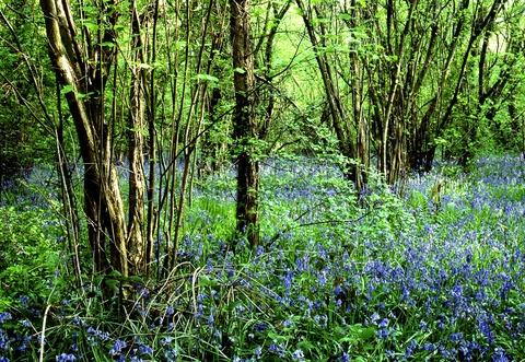 Worcester News: Worcester Woods Country Park
