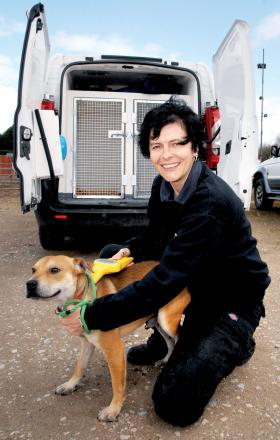 Keep dogs out of flooded water to combat killer disease says dog warden