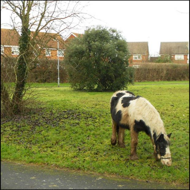 Worcester News: Horse grazing: a familiar sight in the ward