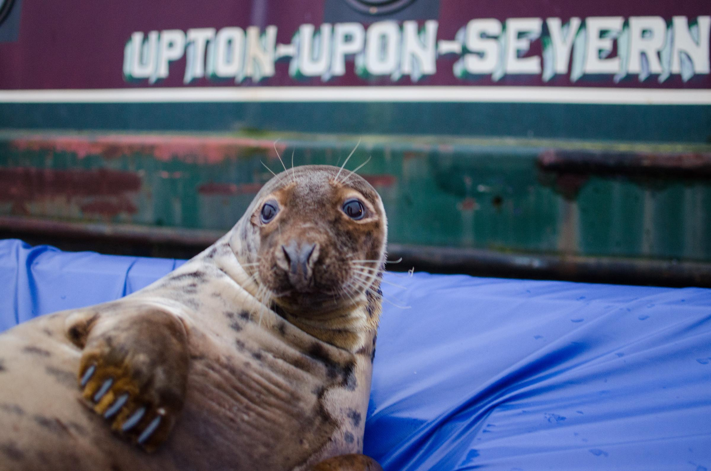 DON'T SHOOT: Strict laws govern the shooting of seals during open season. Picture by Elliott Dean Photography.