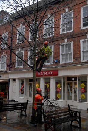 High Street trees felled by council workers