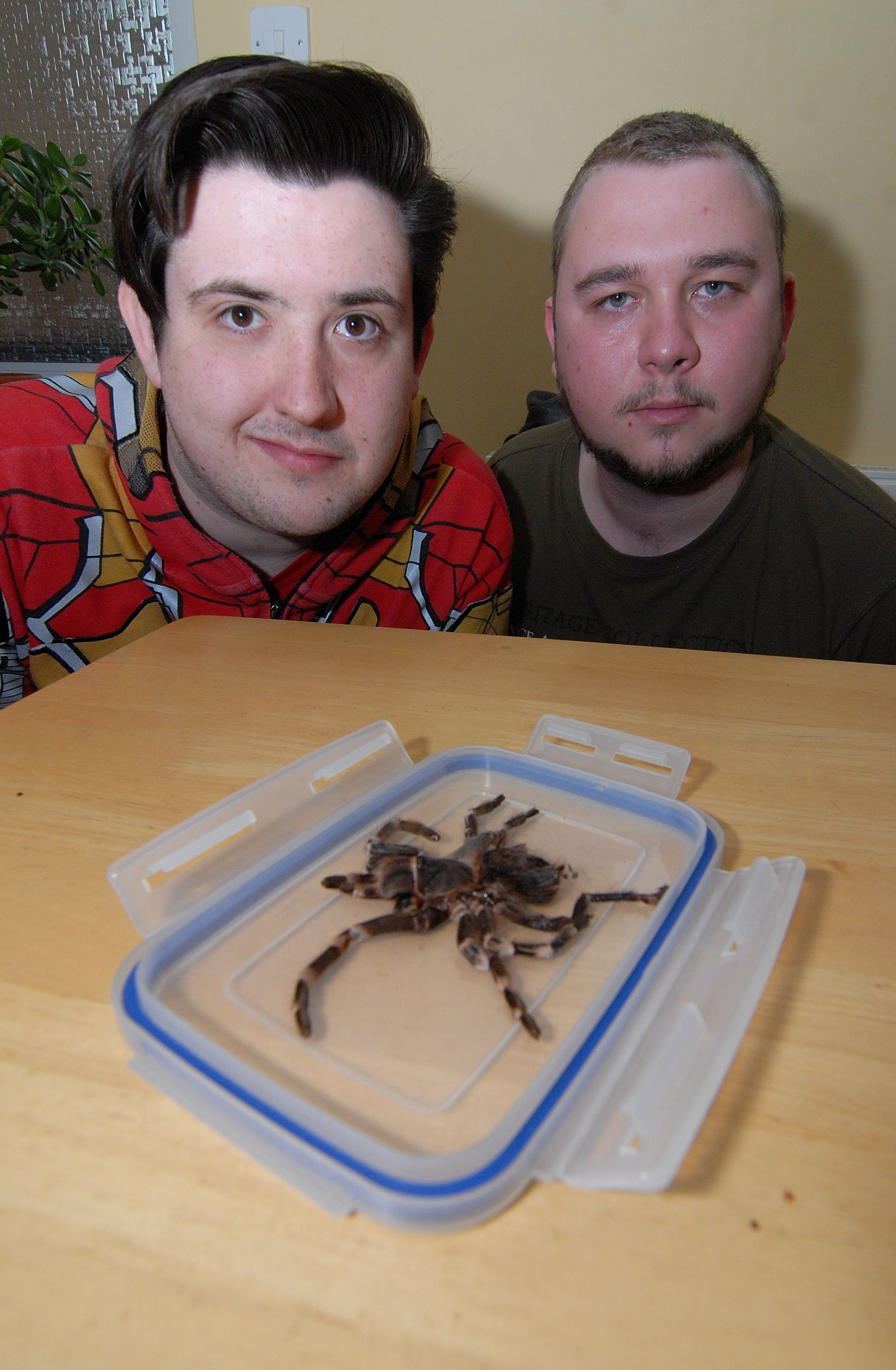 Tarantula found on Pershore pavement