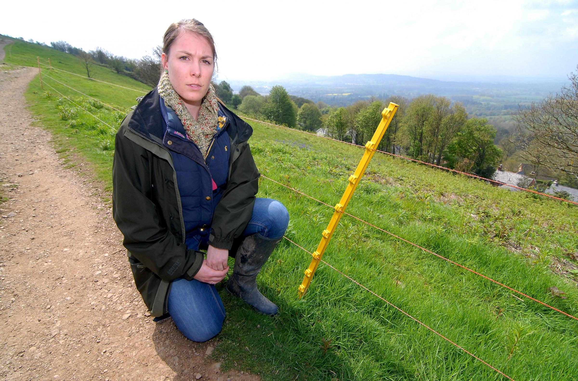 Vandals put traffic and livestock at risk by cutting electric fences on Malvern Hills