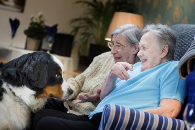 Bentley with residents Irene McCartney and Nora Harris at Cranham Residential Care Home. Picture by Ed Maynard (s)