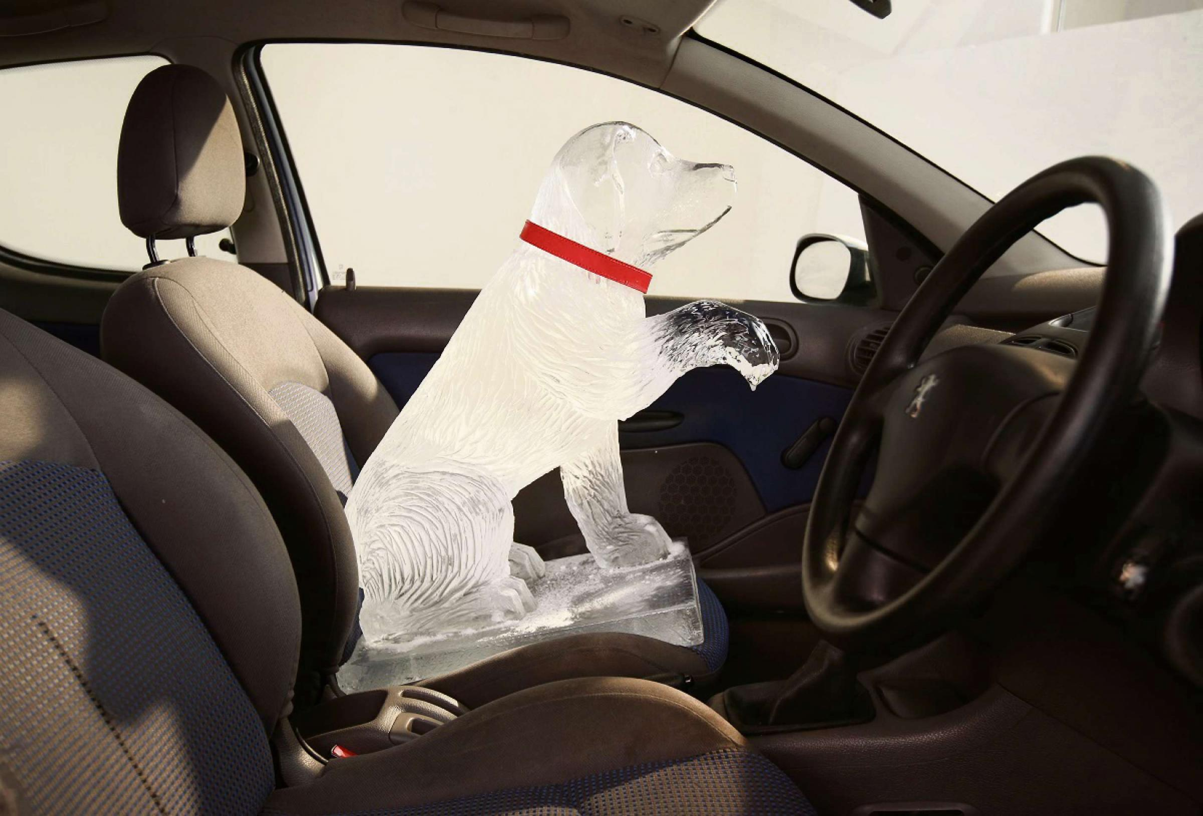Warning over leaving dogs in hot cars. Picture copyright Dogs Trust