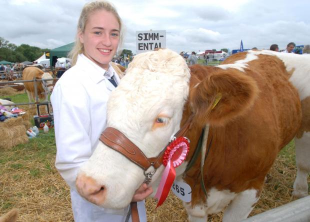 Worcester News: 2714642401. 05/07/14. Hanbury Countryside Show. Amy Cox with prize-winning simmental heifer 'Cornelia'. Picture by Nick Toogood. (7890466)