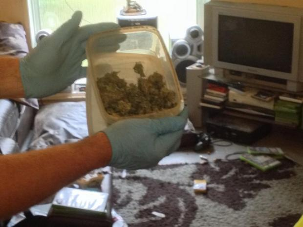 SEIZED: The cannabis bush which was discovered in Elgar Avenue, Malvern