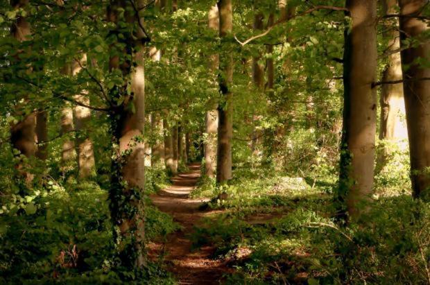 Worcester News: Volunteer at Bromsgrove's Pepper Wood