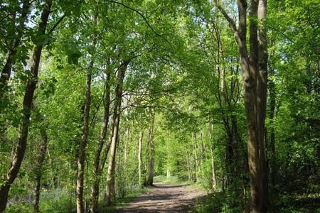 Worcester News: CHARTER: Campaigners from Worcestershire Wildlife Trust are supporting the call for a new charter to protect trees, such as these at Tiddesley Wood, near Pershore.
