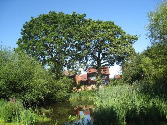 SAD: The two oak trees at Showell Pond, Droitwich will have to be felled. Photo supplied by Wychavon District Council.