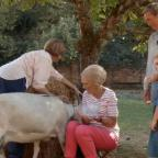 Worcester News: Fans chuckle at Mary Berry's bid to milk a goat