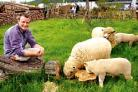 Celebrity gardener Chris Beardshaw and his woolly friends put the final touches to his Victorian garden at the Spring Gardening Show which opens today at the Three Counties Showground. Picture by John Anyon. 19028002