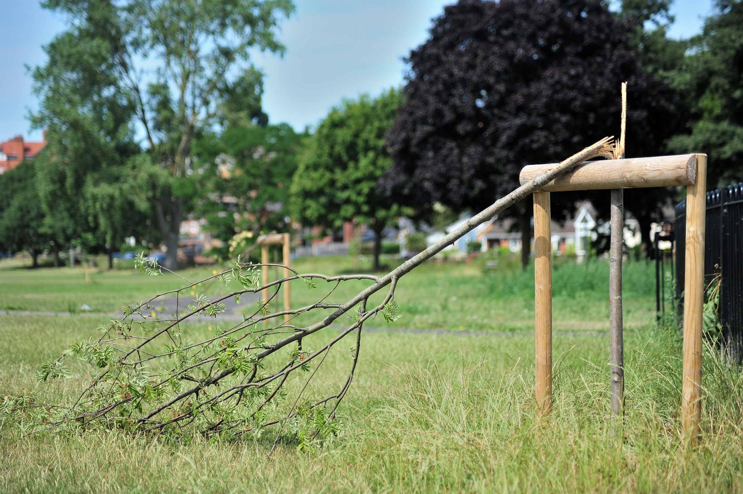 Young trees on Diglis playing fields were snapped by vandals