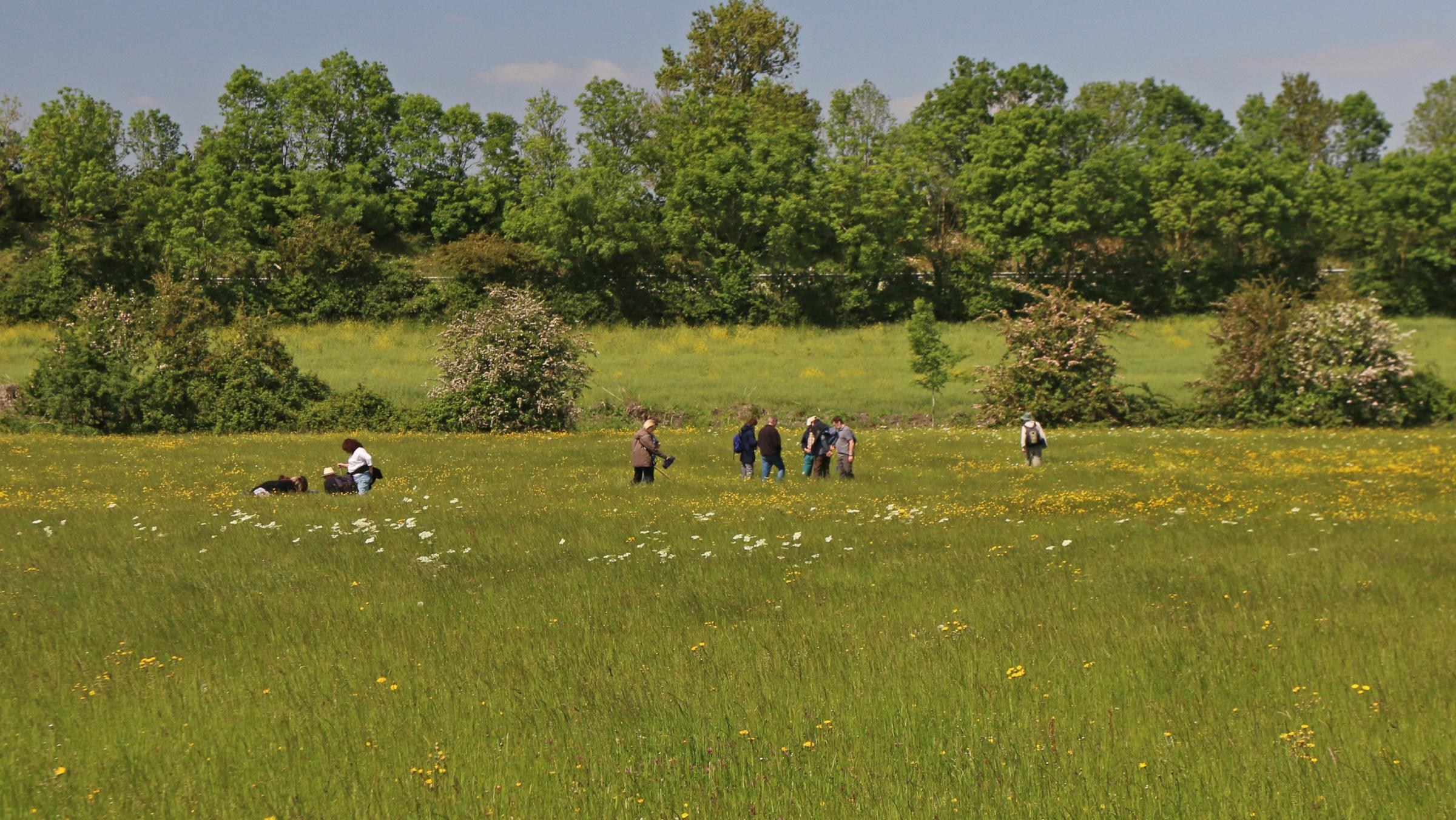 FARM: There is a chance for the public to view wild meadows at Lower Smite Farm.  Photo: Wendy Carter