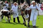 The first day of the Royal Three Counties Show at the Three Counties Showground, Malvern.........Yvonne Ferguson (Right) and Mary Reynolds on their way to winning first prize for Best Calf and Third Prize for Best Cow in the British Longhorn Cattle sectio