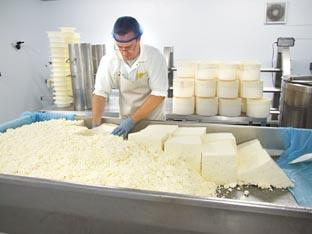 TASTY: Phil Hulland making cheese.