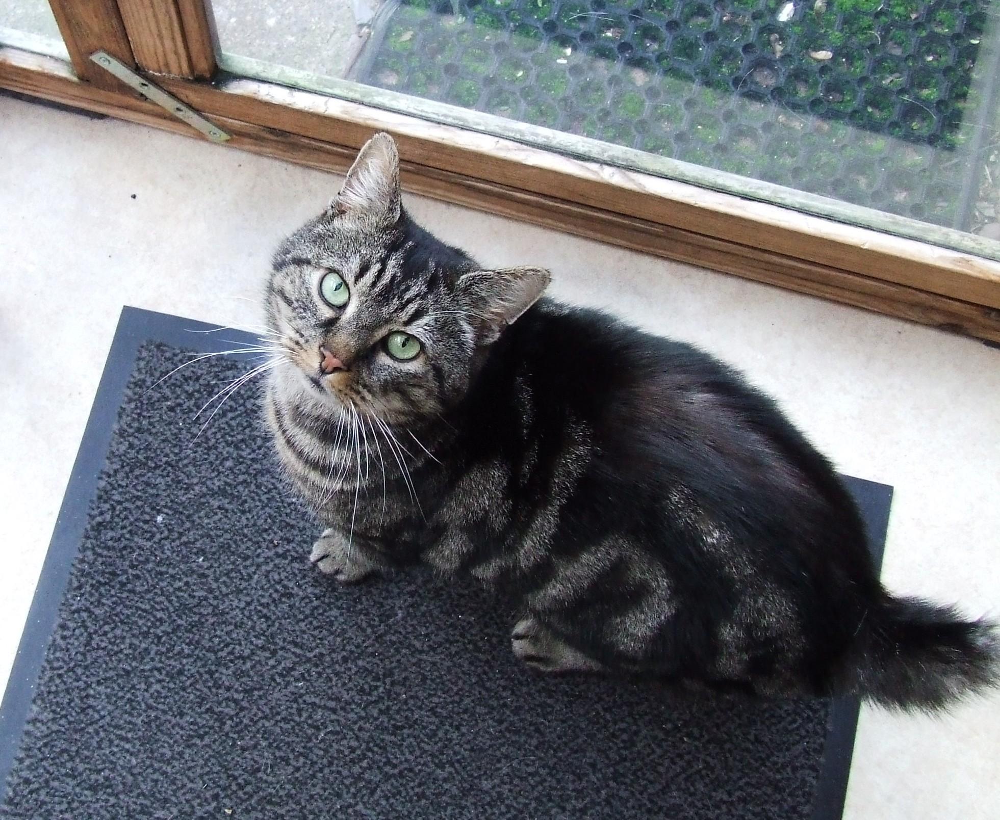 cat in the home ile ilgili görsel sonucu